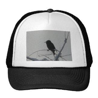 bird on cold day trucker hat