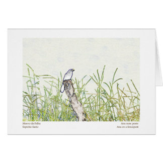 Bird on Post Card