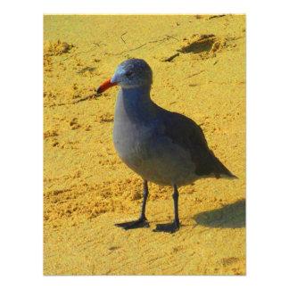 Bird On The Beach Custom Announcements