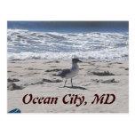 Bird on the Beach Postcard