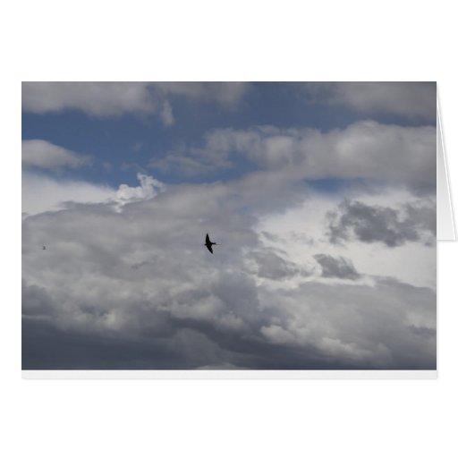 Bird On The Wind Cards