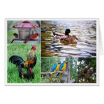 Bird Pairs Collage Greeting Cards