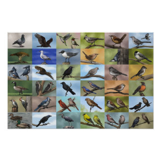 Bird Panoply Print