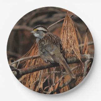 Bird, Paper Plates. Paper Plate