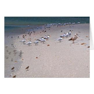 Bird Party on Caladesi Island Beach Card
