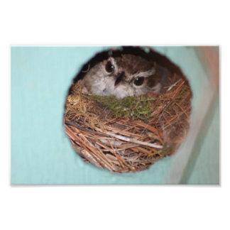 Bird Photo Print