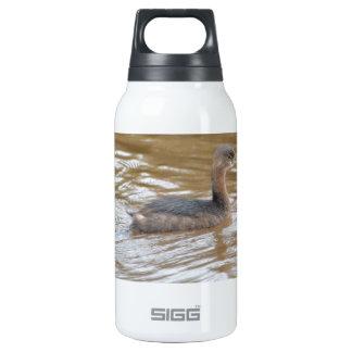 Bird Pied Billed Grebe Nature Insulated Water Bottle
