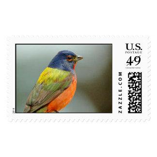 bird postage