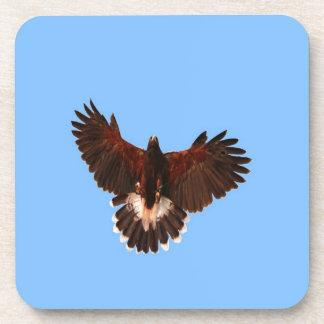bird prey  solid landing coaster