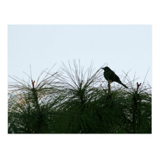 bird silhouette postcard
