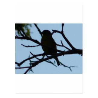 bird,silhouette postcard