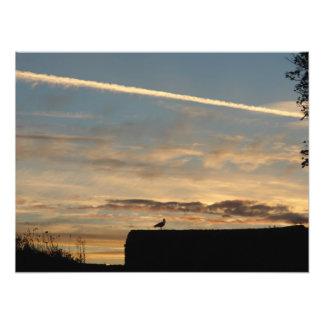 Bird silhouetted against the setting sun photo art