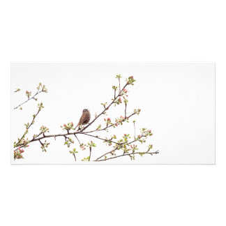 Bird Singing with Spring Flowers Photo Card