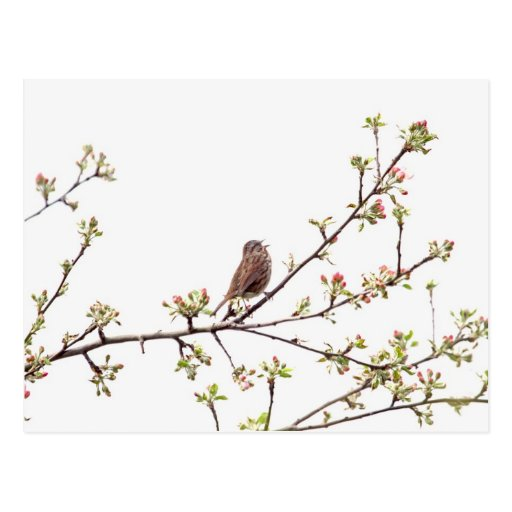 Bird Singing with Spring Flowers Postcard
