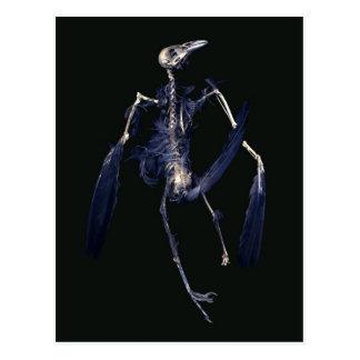 Bird Skeleton Postcard