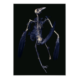 Bird Skeleton Print