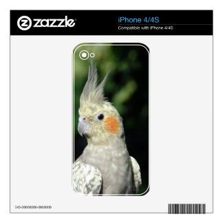 Bird Skins For The iPhone 4S