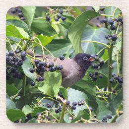 Bird snacking on a berry beverage coaster