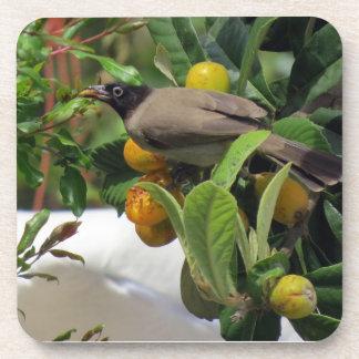 Bird snacking on fruit drink coaster