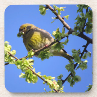 Bird snacking on young elm leaves beverage coaster