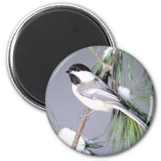 Bird Snow Covered Branch Fridge Magnets