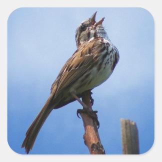 Bird Song Square Sticker