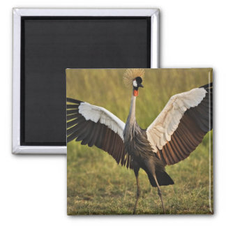 Bird Spreading Wings 2 Inch Square Magnet