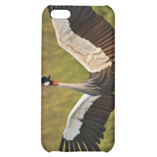 Bird Spreading Wings iPhone 5C Cover
