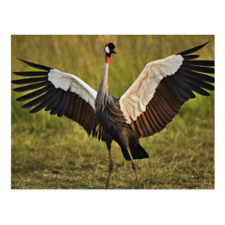 Bird Spreading Wings Postcard