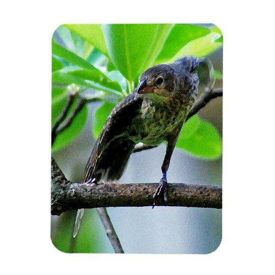 Bird Stretching on Magnolia Tree Magnet