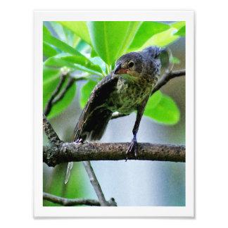 Bird Stretching on Magnolia Tree Photo Art