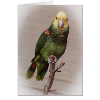 Bird Sympathy Card