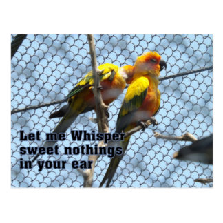 Bird Talk Card