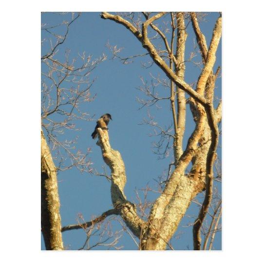 bird, TAYLOR$B.A.K.$ Original Postcard
