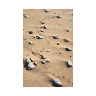 Bird Tracks Wrapped Canvas