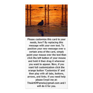 Bird Walking at Sunset Card
