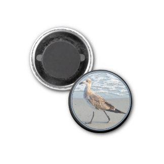 Bird Walks By Sea Magnet