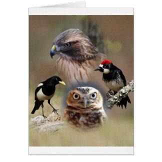 Bird Watcher Collage Card