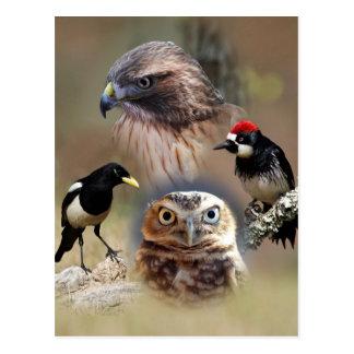 Bird Watcher Collage Post Card