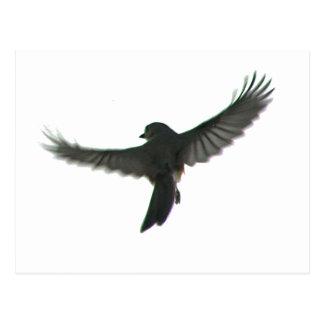 Bird Watcher Post Card