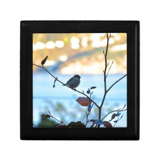 Bird watching gift box