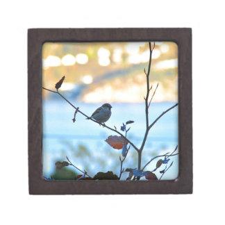 Bird watching jewelry box