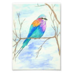 Bird Watercolor Art Lilac Breasted Roller in Tree Photograph