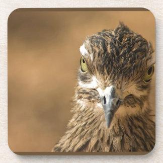 Bird...With Attitude Coaster