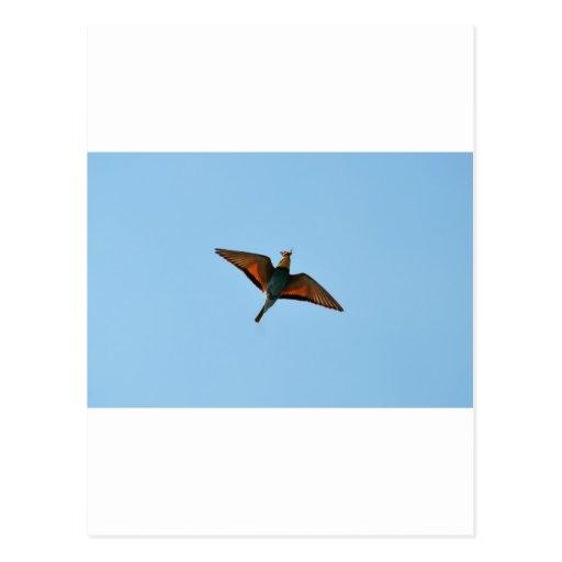Bird With Butterfly In Beak Postcard