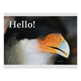 Bird with Hello! text greeting. Crested caracara Print
