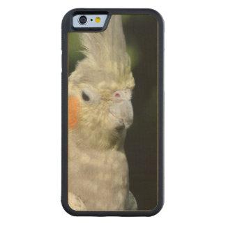 Bird Carved® Maple iPhone 6 Bumper
