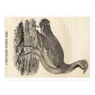 Bird Woodcut Postcard