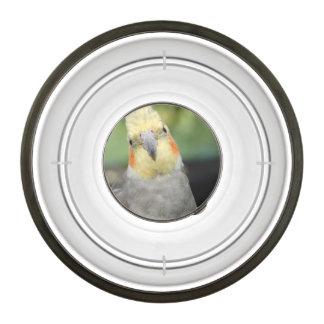 Bird Pet Bowl