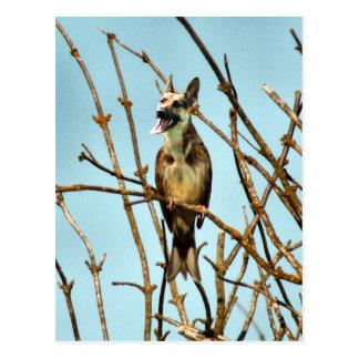 Birdagw Postcard